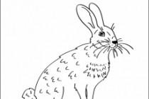Нарисую любую иллюстрацию в стиле doodle 74 - kwork.ru