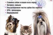 Макет листовки, флаера 55 - kwork.ru