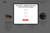 Создание одностраничника на Wordpress 379 - kwork.ru