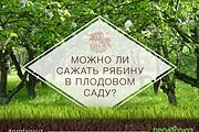 Яркий, броский баннер 17 - kwork.ru