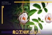 Сделаю обтравку до 15 фото за 1 kwork 50 - kwork.ru