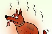 Нарисую простую иллюстрацию в жанре карикатуры 95 - kwork.ru