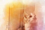 Обработаю фото для соц. сетей. Эффекты, коррекция, рамки. 10 фото 19 - kwork.ru