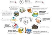 Нарисую инфографику 65 - kwork.ru