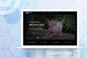 Уникальный дизайн сайта для вас. Интернет магазины и другие сайты 282 - kwork.ru