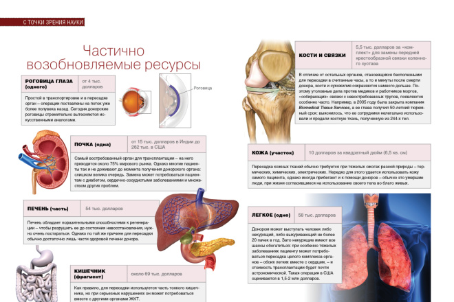Верстка журнала, книги, каталога, меню 9 - kwork.ru