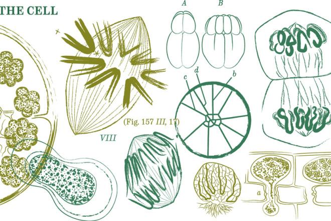 Ботаническая иллюстрация 1 - kwork.ru