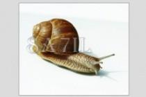 Удалю фон с картинок для использования в каталогах, на сайтах и т. д 14 - kwork.ru