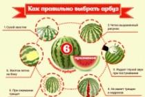 Нарисую инфографику 89 - kwork.ru