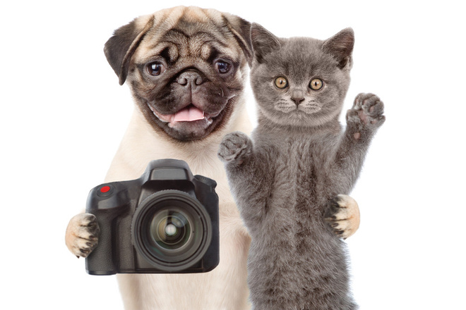 Уменьшу размер Ваших фотографий без потери качества 12 - kwork.ru