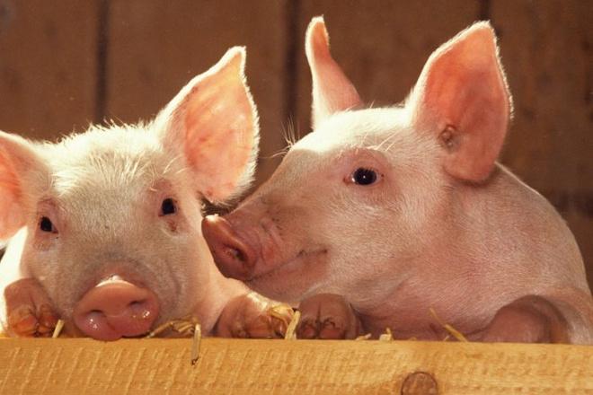 Напишу статьи по кормлению с/х животных, профессионально фото