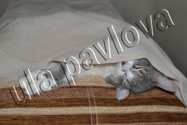 Добавлю водяной знак на фото 1 - kwork.ru