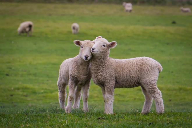 Напишу статьи по вопросам животноводства, профессионально 1 - kwork.ru