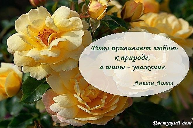 вскоре восхитительные картинки цветов с цитатами все это