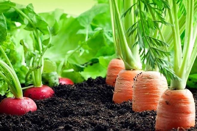 База АГРО фирмы семена Россия 4781 запись 1 - kwork.ru