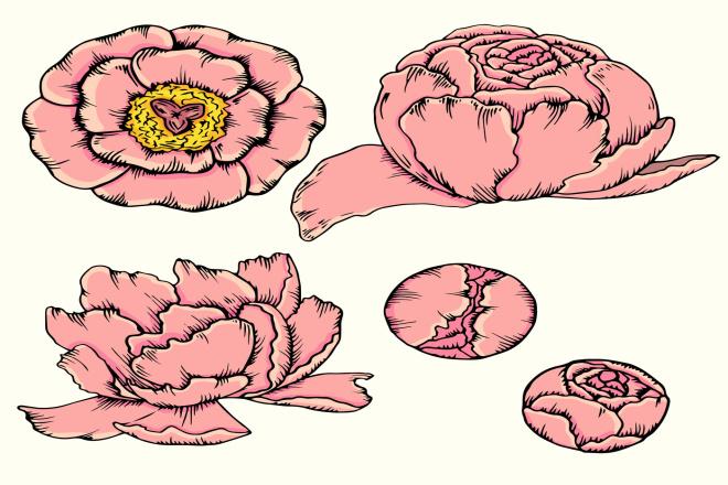 Ботаническая иллюстрация 6 - kwork.ru